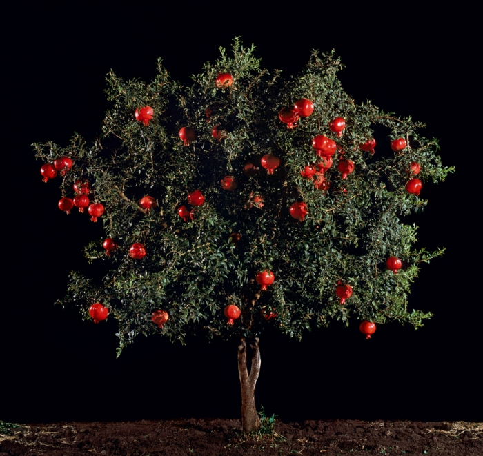 Tal Shochat, 'Pomegranate (Rimon)', 2010