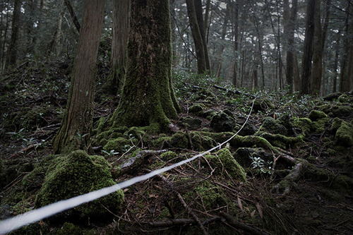 Pieter ten Hoopen: Japan, Suicide Forest