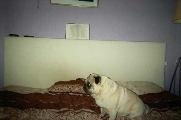 Jan Hoek: This Dog, 2012 (courtesy Galerie Ron Mandos)