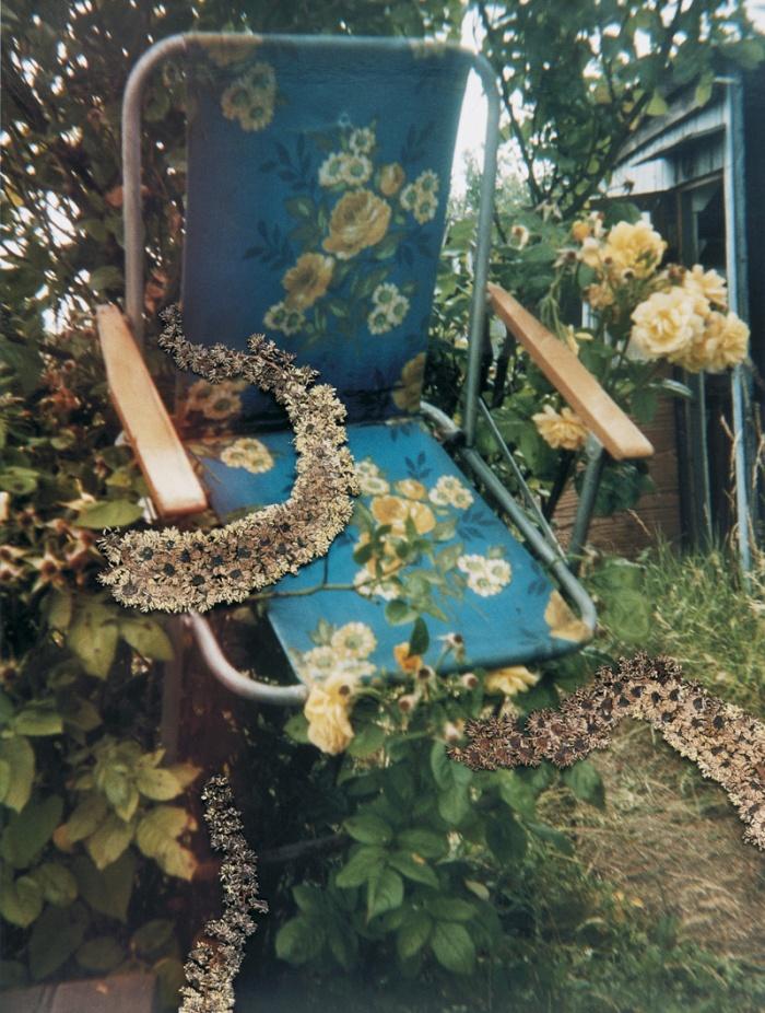 Hackney Flowers © Stephen Gill
