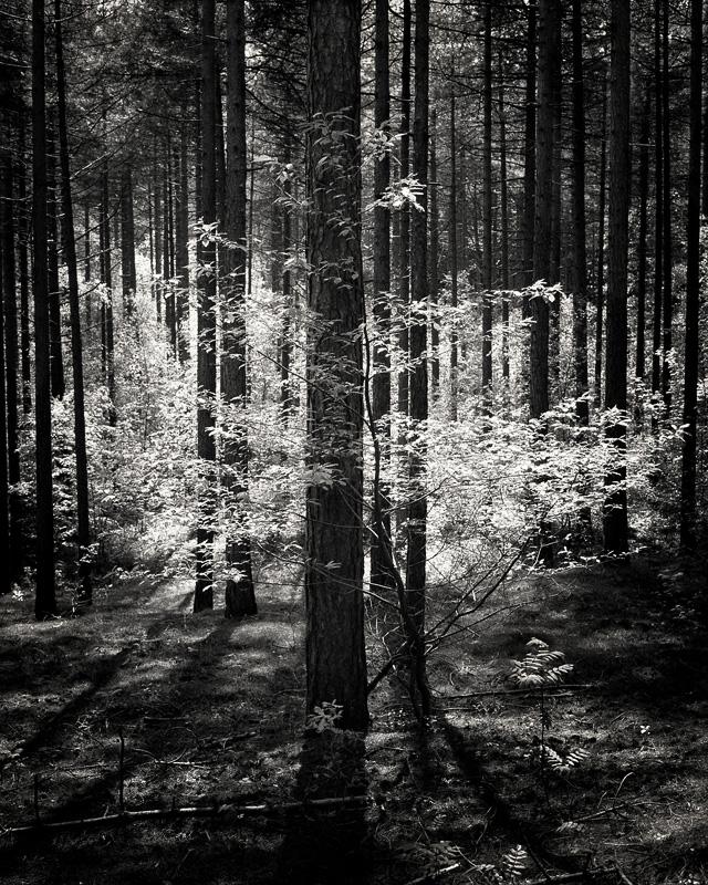 © Mark Nettenbreijers: Rise & Fall XVI, 2013
