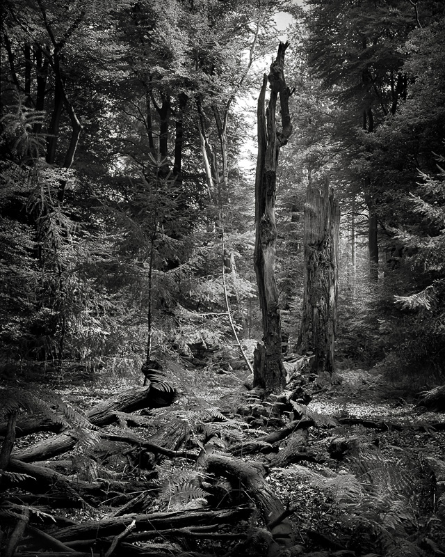 © Mark Nettenbreijers: Rise & Fall XVII, 2013