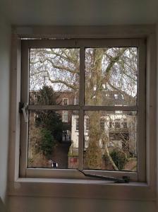 De mooiste boom van Utrecht