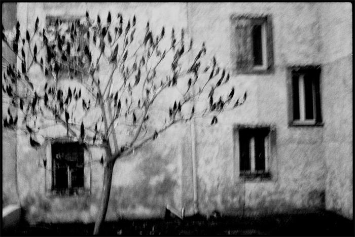 ©Machiel Botman, Treehouse, 2008, Collectie Gemeentemuseum Den Haag