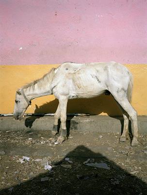 Lucia Nimcova, uit Animal Image