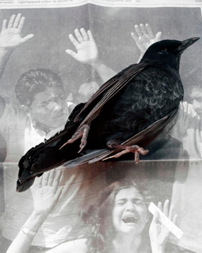 © Geert Goiris, Dead Bird